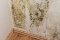 Emergency Services Mold Remediation