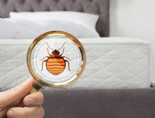 What Surprises Are Lurking In Your Bedroom?