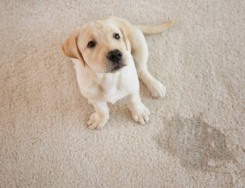 Dealing With Pet Accidents